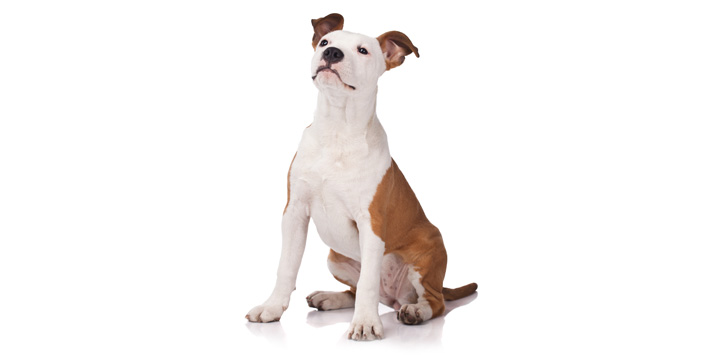 Informative guide about the significant facts regarding online pet supplies