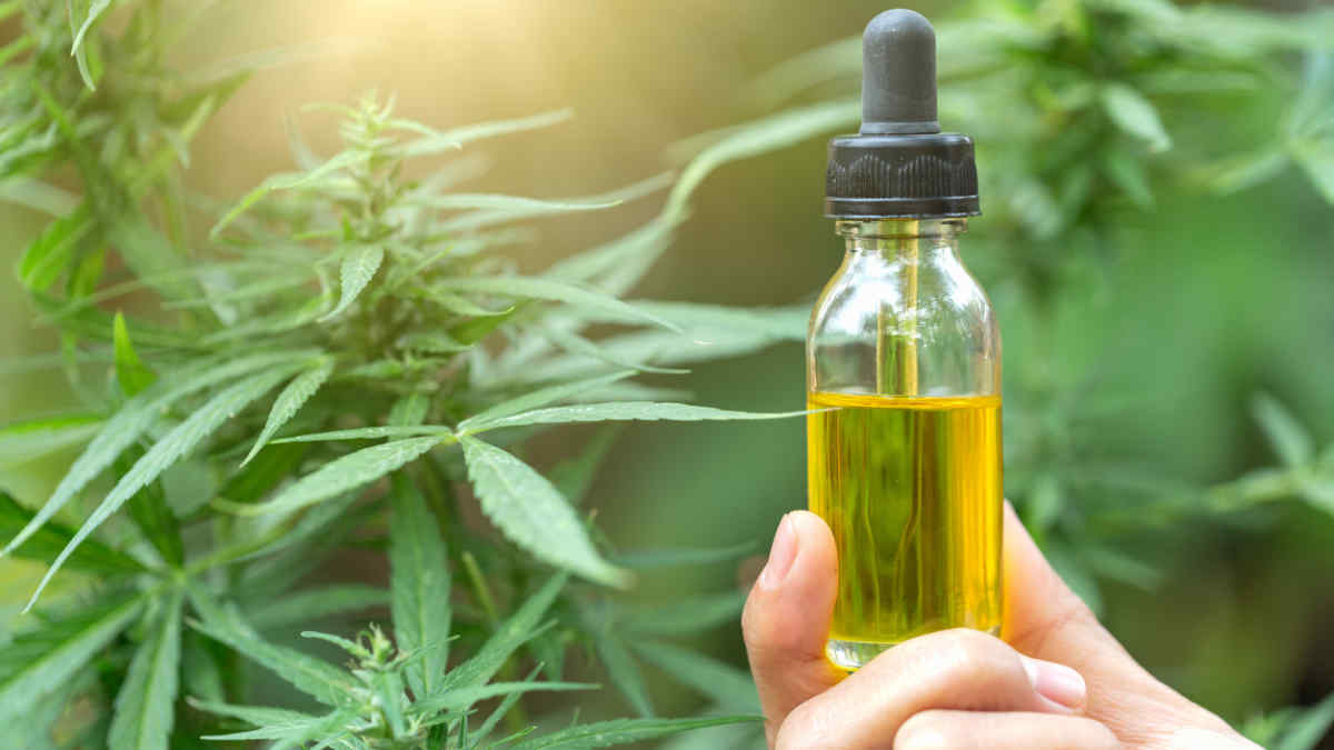 The best place to buy CBD oil (Olio CBD) with a concentrated formula